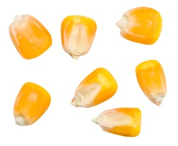 Corn isolated on white background, top view.