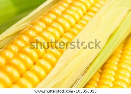 corn kernels full frame closeup