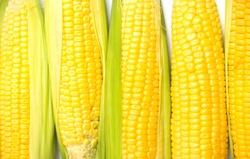 Corn macro. Flat lay, top view.
