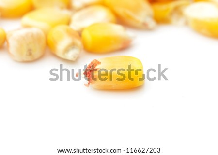 corn on a white background. macro
