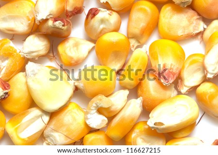 corn on a white background. macro - stock photo