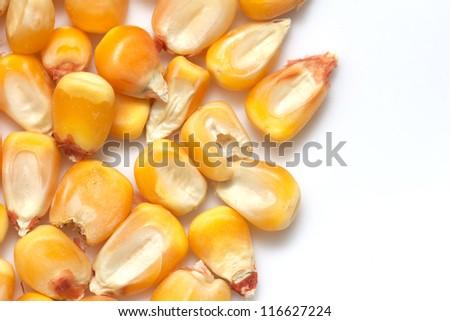 corn on a white background. macro