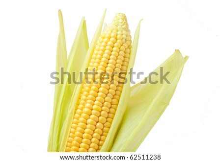 Corn on the cob on a white background isolated. / Corn