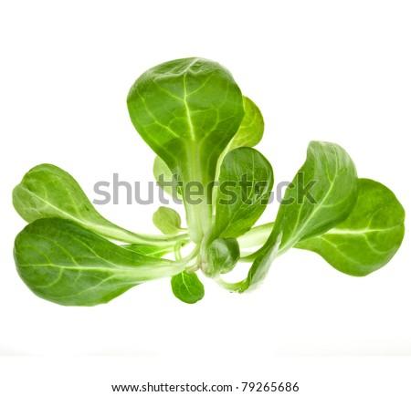 corn salad leaves isolated