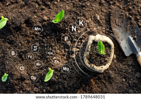 Corn seedlings grow from fertile ground and have technology icons about minerals in the soil suitable for crops. Stock photo ©