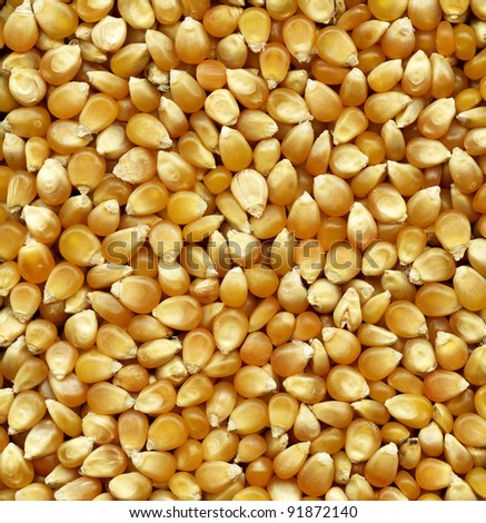 Corn seeds background for your design