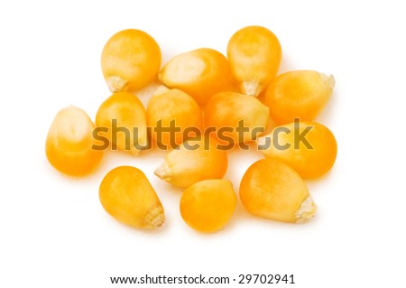 Corn seeds isolated on the white background