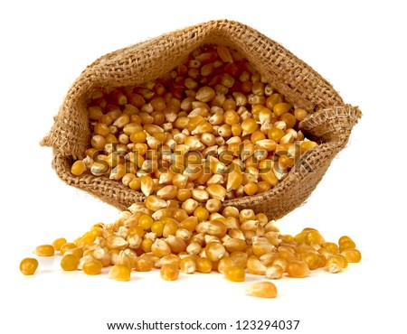 Corn spilling from burlap on white background