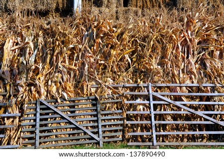 corn stems