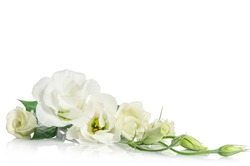 corner fron beautiful white eustoma flowers isolated on white background