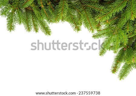 corner made of green spruce branches