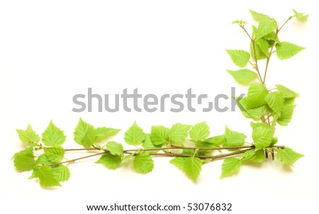 Corner with green birch over white background - stock photo