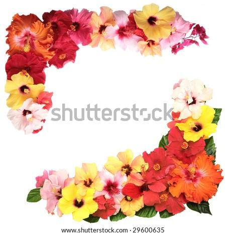 Corner with hibiscus flowers - stock photo