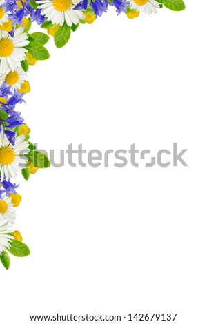 Corner with wild flowers on the white background