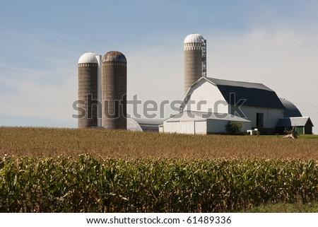 cornfield and a barn  with silos in rural wisconsin