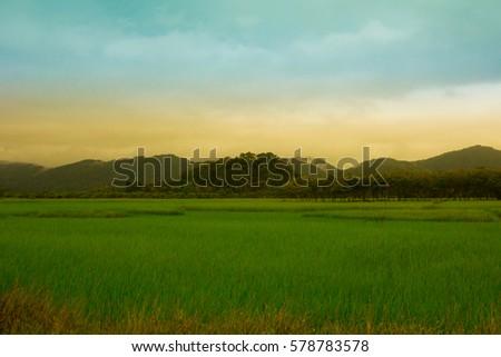 Cornfield and sky - Shutterstock ID 578783578
