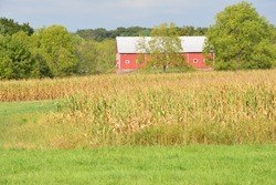 Cornfields at Gettsyburg the sight of the battle that took place from July 1-3 1863.