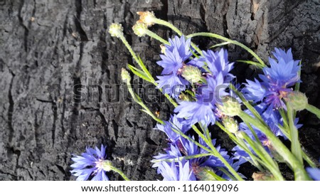 Cornflowers. Blooming cornflowers. Bouquet of cornflowers on woody background. Bouquet of field cornflowers #1164019096