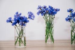 Cornflowers. Close up of blue cornflowers. Bouquet of beautiful blue cornflowers in a transparent vase. Flowers in a transparent vase.