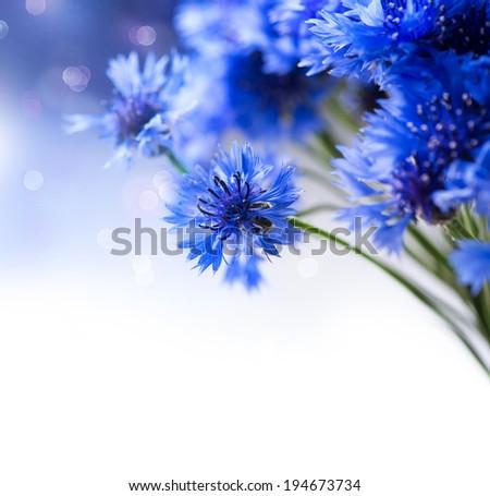 Cornflowers. Wild Blue Flowers Blooming. Border Art Design. White background. Closeup Image. Soft Focus