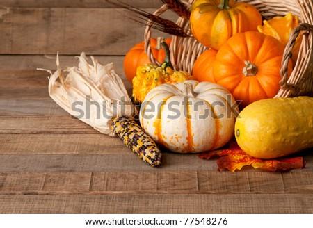 Cornucopia of Fall Pumpkins, Gourds, and Corn in Rustic Setting