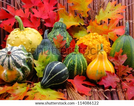 Cornucopia of gourds, leaves, stems, reeds, and wooden encasement.