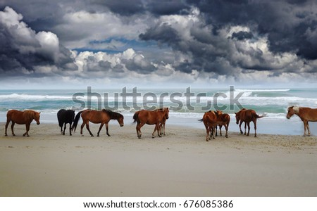 Corolla wild horses on the beach in North Carolina under dark clouds