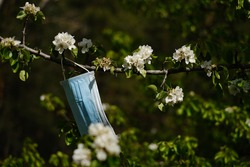 coronavirus and spring. protective medical mask hanging on a flowering spring tree. covid19 epidemic