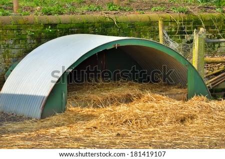 corrugated iron animal pen