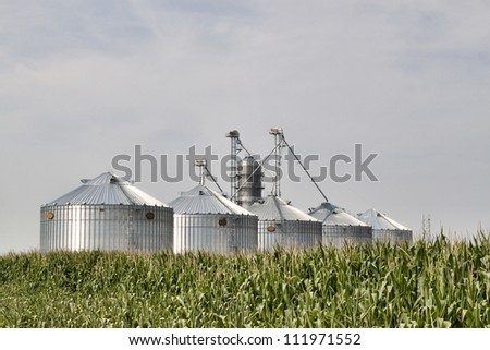 Corrugated metal silos in a field of corn. Image shows five new silos glowing in the sun with a field of corn in the foreground and shot against a blue sky.