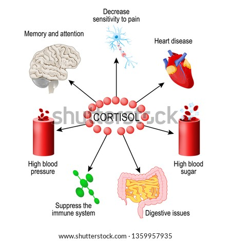 Cortisol hormone. functions in the body. It is hormone Released in response to stress and low blood-glucose concentration. Human endocrine system. diagram for medical, educational and scientific use.