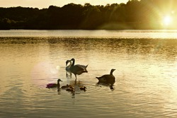 Cosmeston lakes sunset and swans 🦢🌞🌅