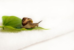 Cosmetics organic made with slaver of snail, for skin and health. Lifestyle beauty.