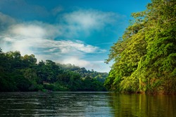 Costa Rica landscape from Boca Tapada, Rio San Carlos. Riverside with meadows and cows, tropical cloudy forest in the background. View from the boat.