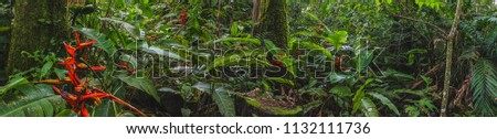 Costa Rica Rainforest panorama with flowers and plants