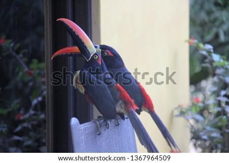 Costa Rica Toucans #1367964509