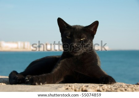 Costline view of stray cat on Cadiz, Spain