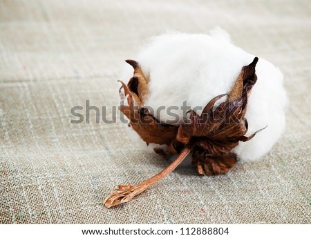 Cotton boll on cotton fabric surface