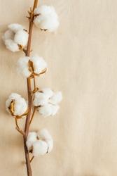 Cotton bolls on cotton fabric