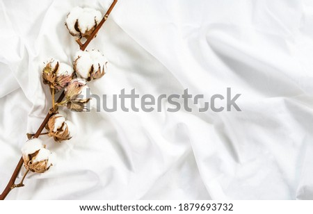 Cotton branch of plant flower on crumpled cotton white fabric. Cotton bed linen. Minimalistic cozy light background.