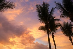 Cotton Candy Sky with Palm Trees. Sunrise in Vero Beach, Florida over Atlantic Ocean at an Oceanfront Resort on Orchid Island. Pink Purple Clouds Dreamy Sky No Filter. Tropical Sunset Background.