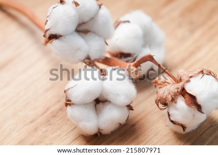 Cotton flower close up on wooden table