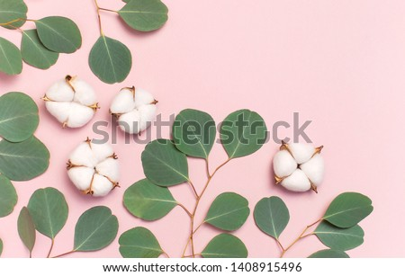 Cotton flowers and green eucalyptus twig on pastel pink background. Flat lay, top view, copy space. Flower composition with delicate cotton flowers. Cotton background.