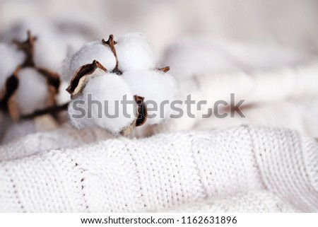 Cotton flowers lying on top of a knitted blanket. Extreme shallow depth of field with selective focus on boll.