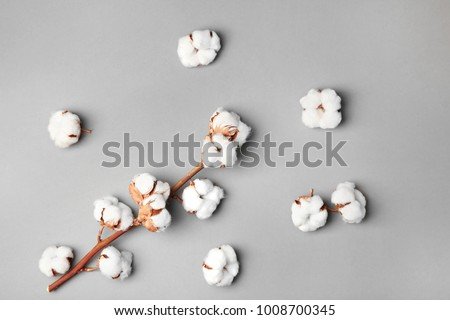 Cotton flowers on grey background #1008700345