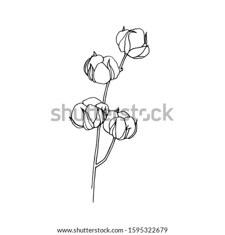 Cotton Illustration on white background. Cotton sketch. Cotton flower. Hand drawn cotton brunch