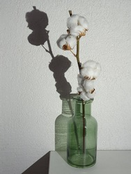 cotton in glassbottle with shadow