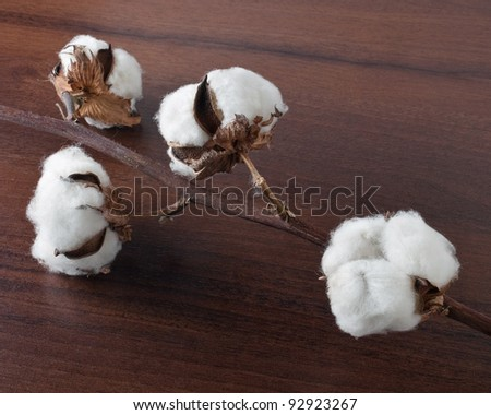 Cotton on the wooden background