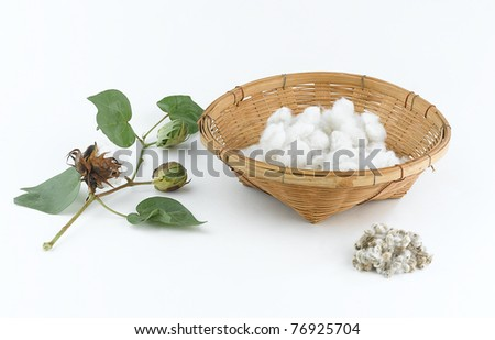 Cotton plant and seed