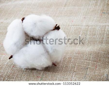 Cotton plant on the cotton texture